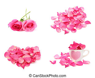 rosa, e, pétala, isolado, branco, fundo