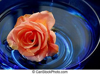 rosa, en, agua