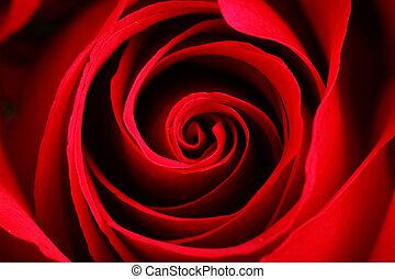 rosa, encima de cierre
