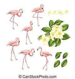 rosa, estate, moda, collection., set., scheda, kit., uccelli, tropicale, bundle., fenicotteri, fiore, plumeria, sagoma, invito, stampa, fiori, tuo, elementi, design.