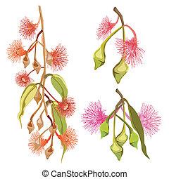 rosa, eukalyptus, blumen, rotes