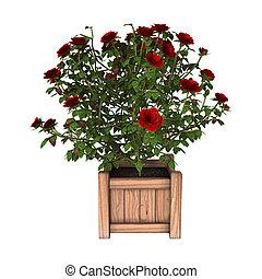 rosa, fazendo, bush, branco vermelho, 3d
