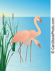 rosa, fenicotteri, canne, lago