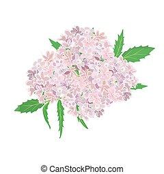 rosa, fiori bianchi, isolato, fondo