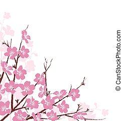 rosa, fiori bianchi, rami, isolato