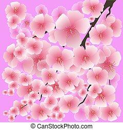 rosa, fiori primaverili, isolato, fondo.