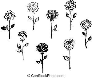 rosa, fiori