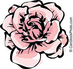 rosa, flor, delicado