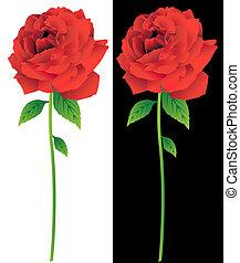 rosa, flor, tallo rojo