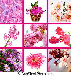 rosa florece, collage