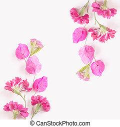 rosa florece, en, un, fondo blanco