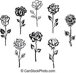 rosa, flores, conjunto