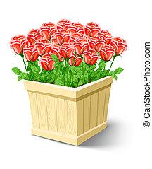 rosa, flores, en caja, aislado, blanco
