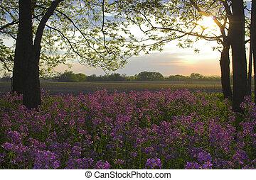 rosa, flores salvajes, bosque