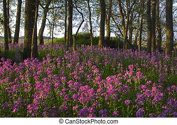 rosa, flores salvajes, y, bosque