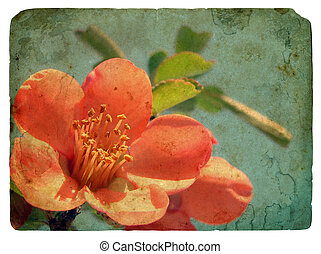 rosa, flower., vecchio, cartolina