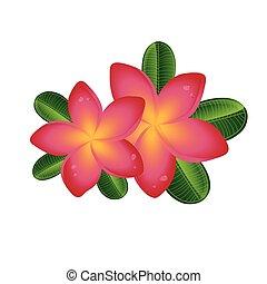 rosa, foglie, isolato, plumeria, fondo, frangipany, fiori bianchi