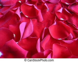 rosa, fondo rojo, pétalos