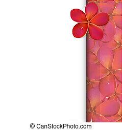 rosa, frangipani, bandiera