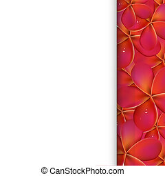 rosa, frangipani, carta