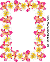 rosa, frangipani, cornice, fiori, bianco