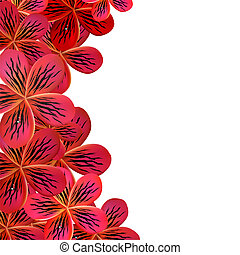 rosa, frangipani, cornice