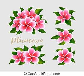 rosa, frangipani, foglie, isolato, realistico, verde, plumeria, fiori bianchi