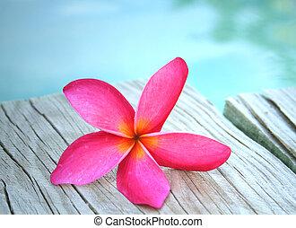 rosa, frangipani