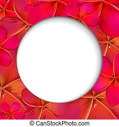 rosa, frangipani, shere