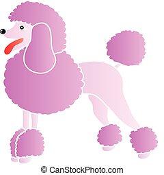 rosa, franzoesischer pudel