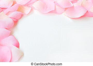 rosa, frontera, pétalo