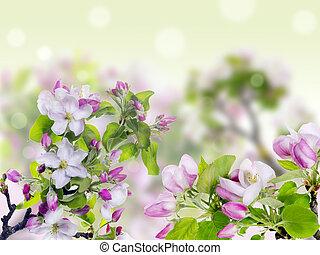 rosa, fruehjahr, begriff