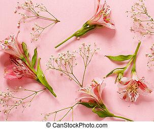 Rosa, Fruehjahr, blumen,  (alstroemeria), hintergrund