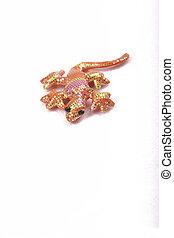 rosa, gecko