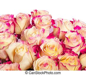rosa gelb, rosen, hintergrund