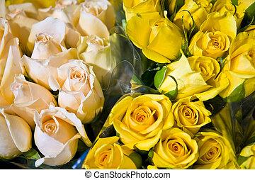 rosa gelb, rosen