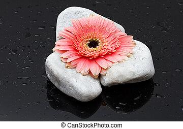 rosa, gerbera, posa, bianco, pietre, e, scuro, bagnato, superficie, riflessione