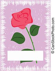 rosa, grunge, scheda