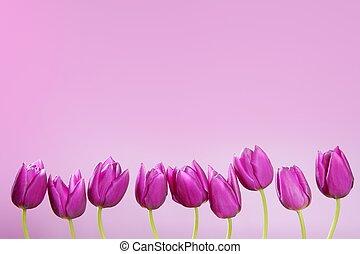 rosa, grupp, tulpaner, ordning, fodra, blomningen, rad