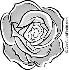 rosa, ilustración