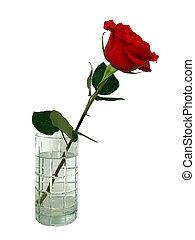 rosa, in, vaso