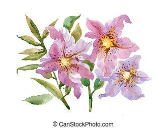 rosa, isolato, mano, fondo, disegnato, fiori bianchi