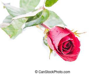 rosa, isole, vermelho