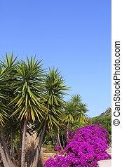 rosa, jardín, árboles, bougainvillea, palma, flores