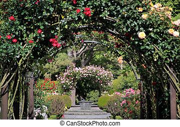 rosa, jardim, em, a, jardins botanic