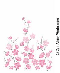 rosa, körsbär blomstrar