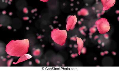 rosa kronblad, flygning, hd., dof.