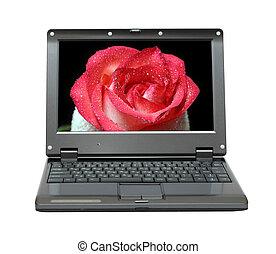 rosa, laptop, schermo, rosso