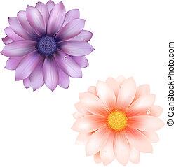 rosa, lila, gerber