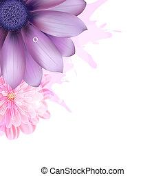 rosa, lila, gerbers